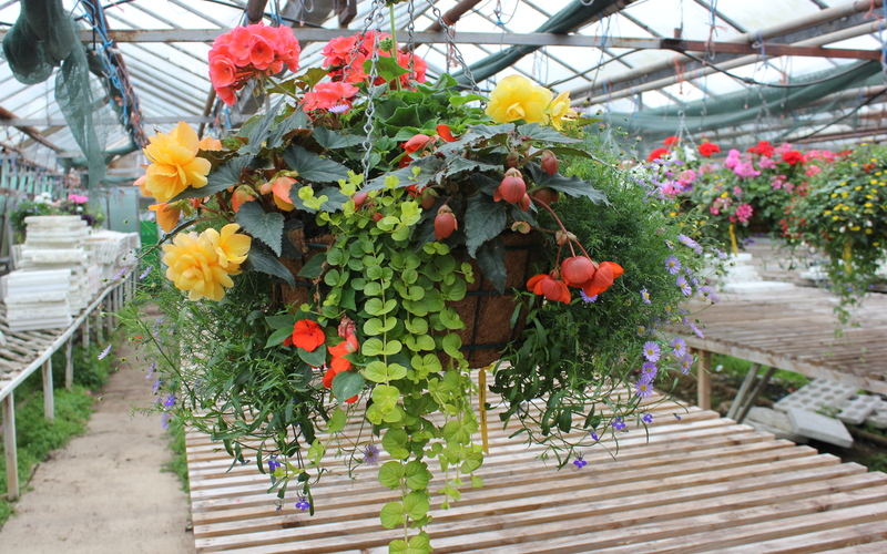 Hanging Baskets & Floral Displays